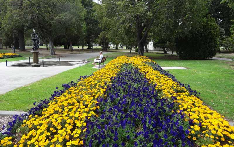 best-annuals-for-sun-garden-image