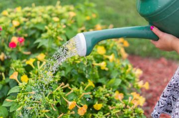 how often should you water your garden