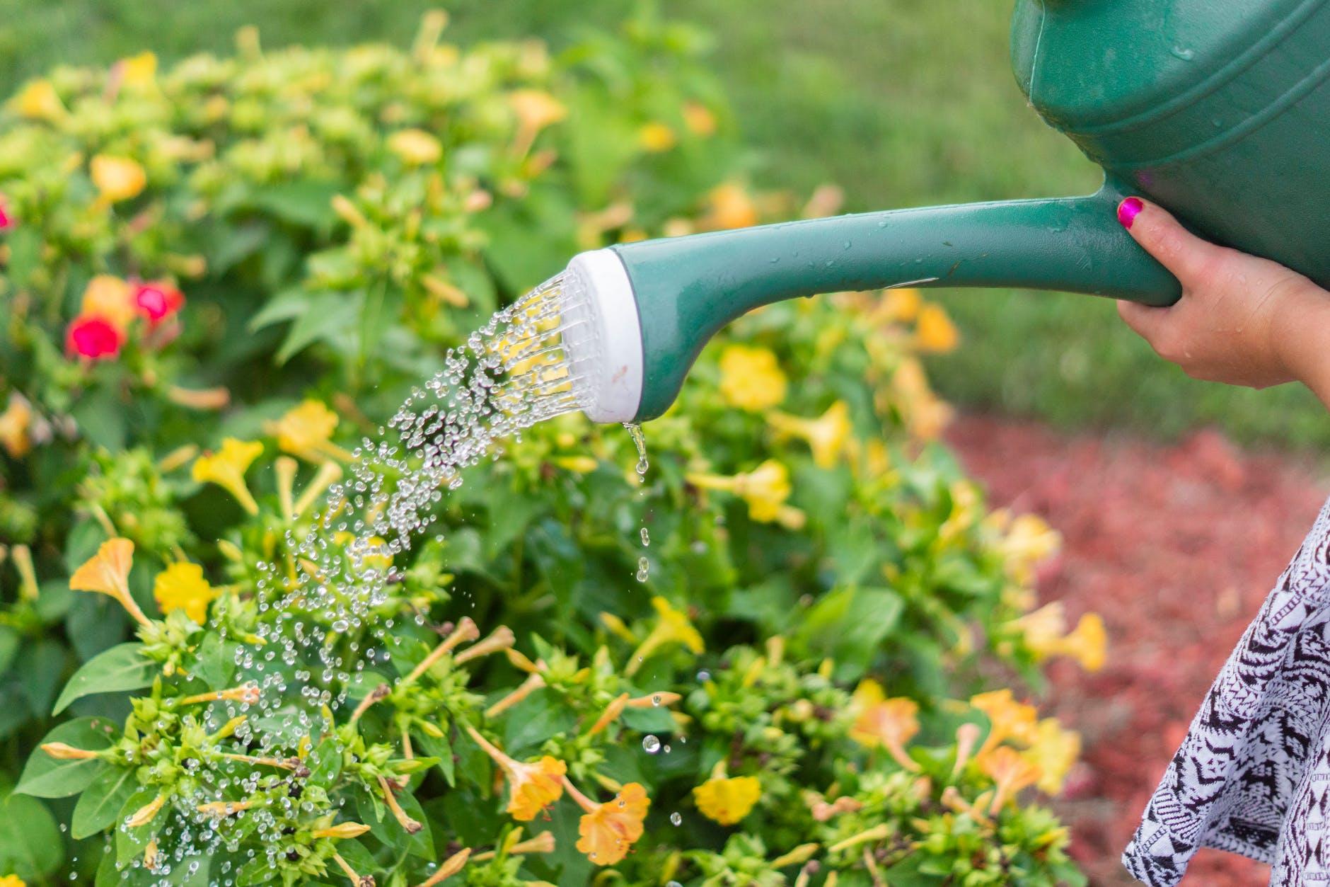 how often should you water your garden