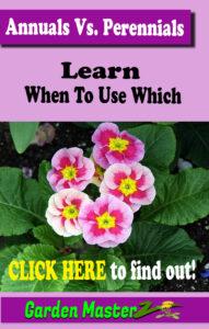 annuals vs perennials pinterest image