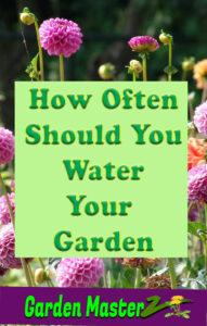 how often should you water your garden pinterest image