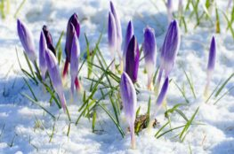 the best winter plants that flower image