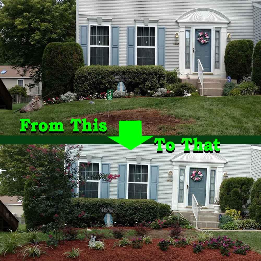new to gardening image
