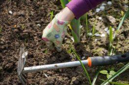 planting beds close up