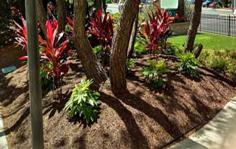 tropical planting bed