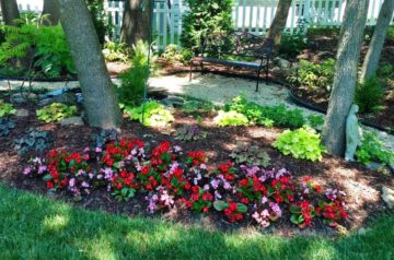 best annuals for shade