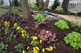 garden preperation and maintenance