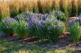 landscaping shrubs and bushes