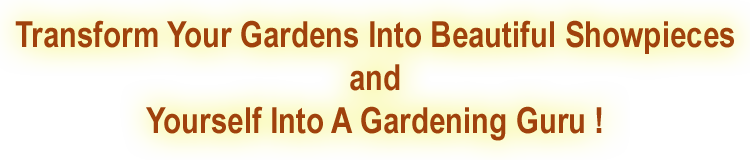 transform your gardens graphic3