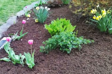 how to mulch gardens