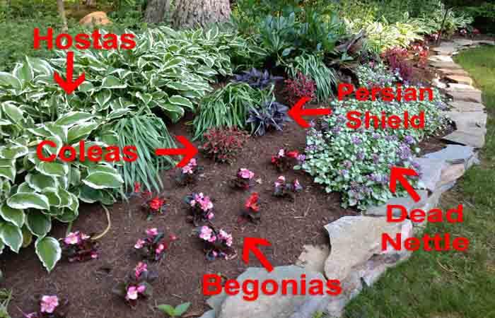 garden example image