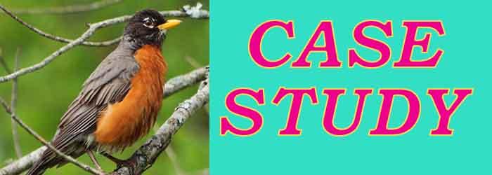 robin case study image