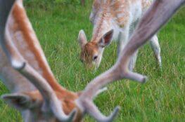 what plants do deer eat image